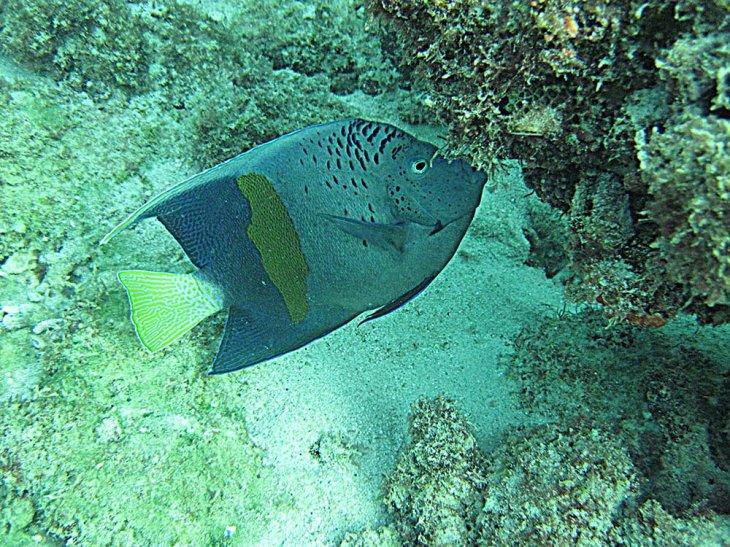 نام: هاماد ماهی.jpg نمایش: 536 اندازه: 164.0 کیلو بایت