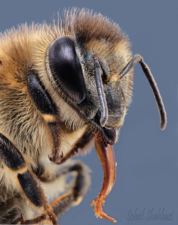 نام: bee 3.jpg نمایش: 535 اندازه: 194.3 کیلو بایت