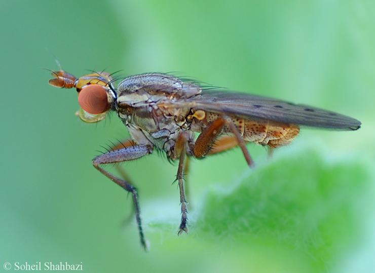 نام: Fly.jpg نمایش: 363 اندازه: 240.7 کیلو بایت