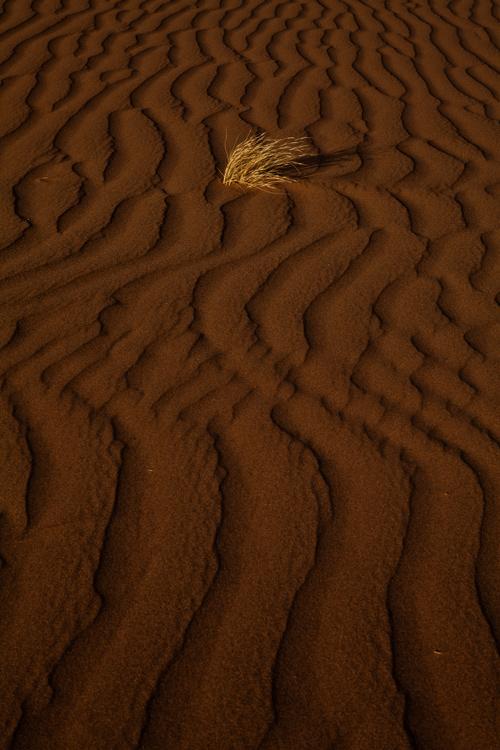 نام: Desert.jpg نمایش: 542 اندازه: 197.1 کیلو بایت