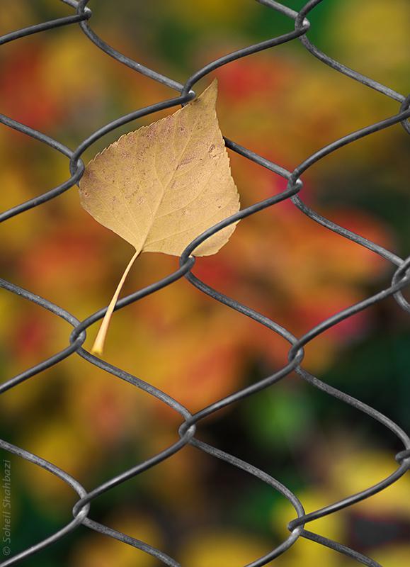 نام: Autumn 2.jpg نمایش: 411 اندازه: 228.8 کیلو بایت