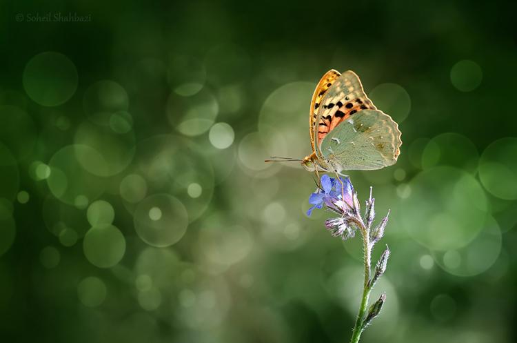 نام: Butterfly2.jpg نمایش: 275 اندازه: 203.8 کیلو بایت