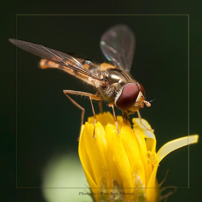 نام: insect03.jpg نمایش: 355 اندازه: 181.1 کیلو بایت