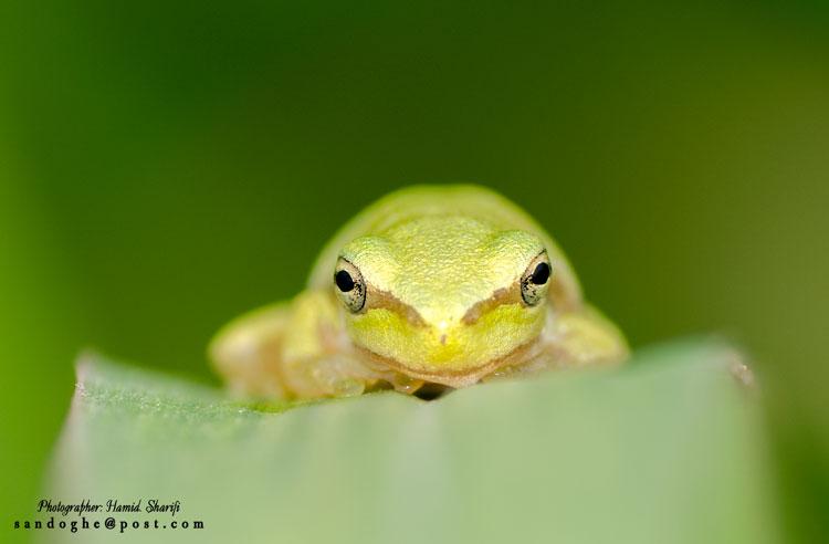 نام: Frog-750.jpg نمایش: 443 اندازه: 30.7 کیلو بایت