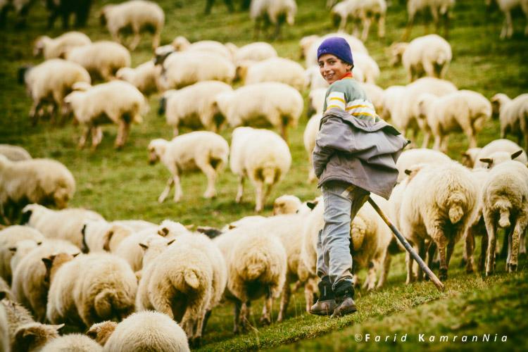 نام: Shepherd boy.jpg نمایش: 848 اندازه: 154.2 کیلو بایت