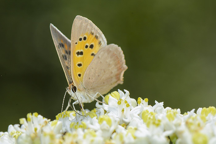 نام: Butterfly.jpg نمایش: 408 اندازه: 83.8 کیلو بایت