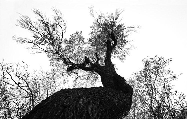 نام: Untitled-1.jpg نمایش: 640 اندازه: 150.5 کیلو بایت