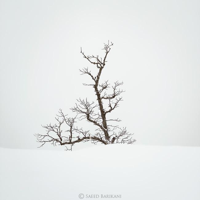 نام: Tree.jpg نمایش: 617 اندازه: 80.9 کیلو بایت