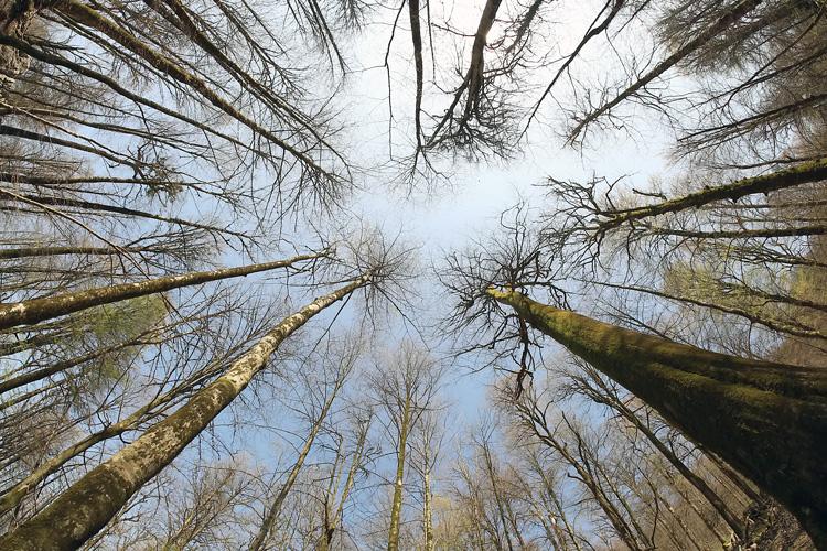 نام: Woods.jpg نمایش: 676 اندازه: 286.8 کیلو بایت