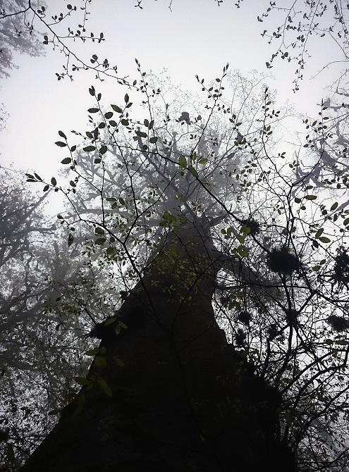 نام: tree color w ek.jpg نمایش: 468 اندازه: 211.8 کیلو بایت
