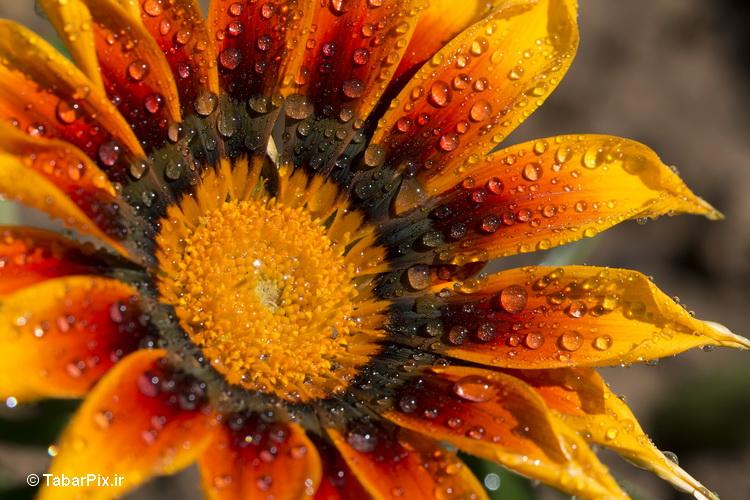 نام: Flower.jpg نمایش: 576 اندازه: 201.9 کیلو بایت