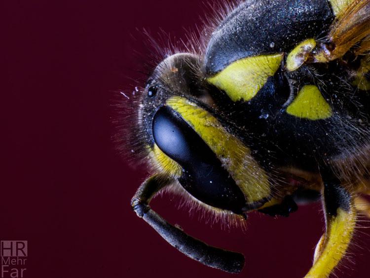 نام: Bee-S.jpg نمایش: 328 اندازه: 88.6 کیلو بایت