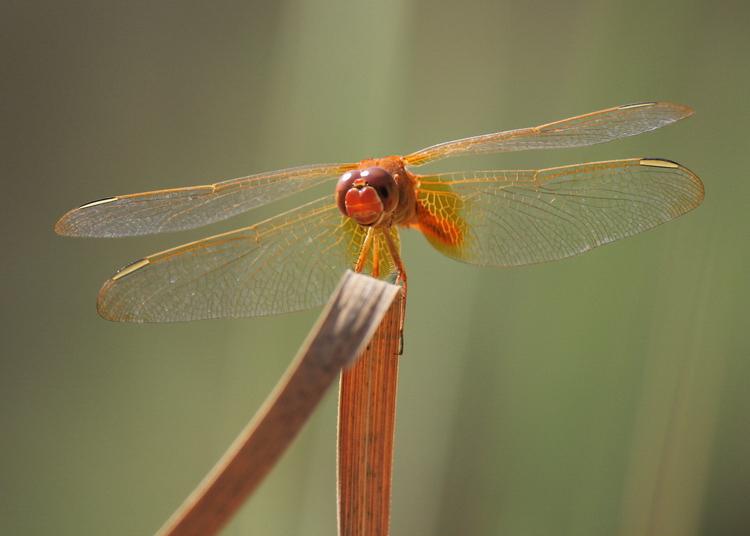 نام: dragonfly1.jpg نمایش: 340 اندازه: 186.8 کیلو بایت