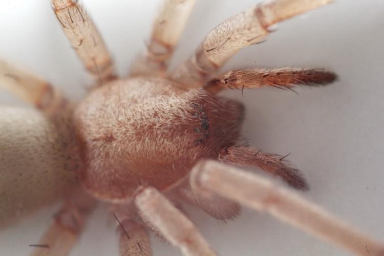 نام: spider2.jpg نمایش: 308 اندازه: 107.6 کیلو بایت