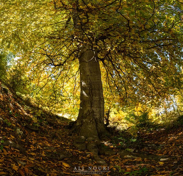 نام: Untitled_Panorama1ثg.jpg نمایش: 602 اندازه: 296.3 کیلو بایت