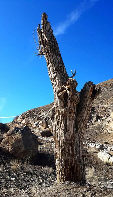 نام: Tree-25-.jpg نمایش: 308 اندازه: 263.6 کیلو بایت