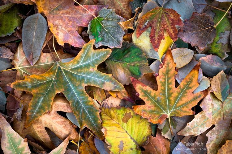 نام: Tabarpix.ir-Autumn.jpg نمایش: 202 اندازه: 268.9 کیلو بایت